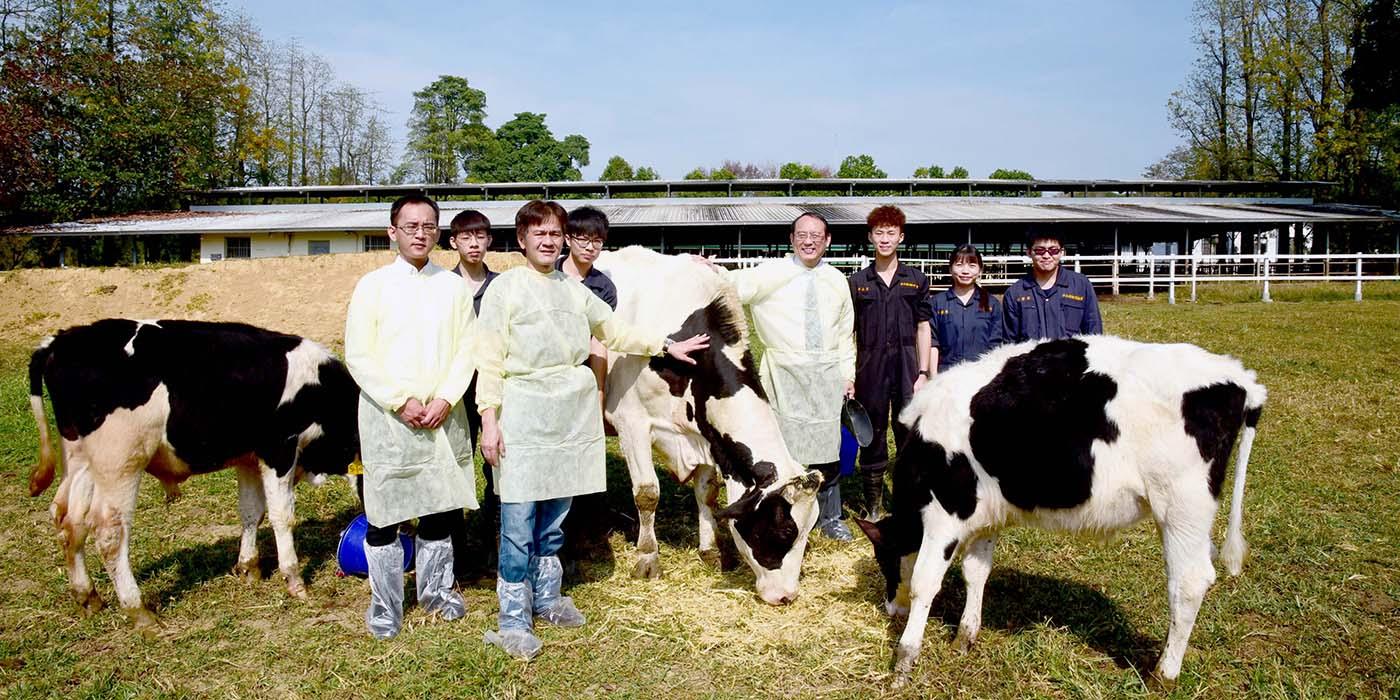 新興生殖科技-紡綞體轉置荷蘭牛成功誕生